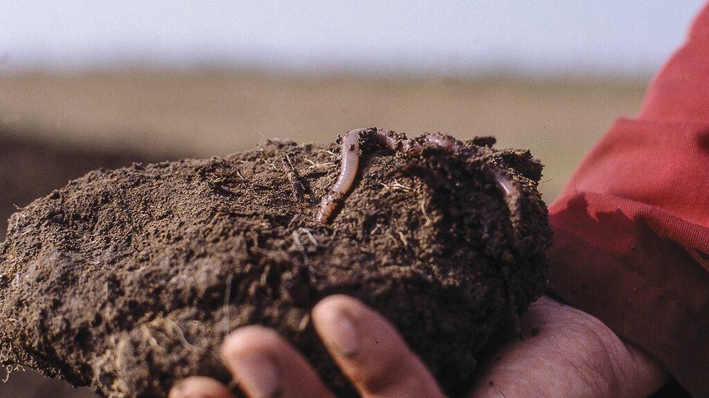 Дождевые черви - лучшие друзья фермера